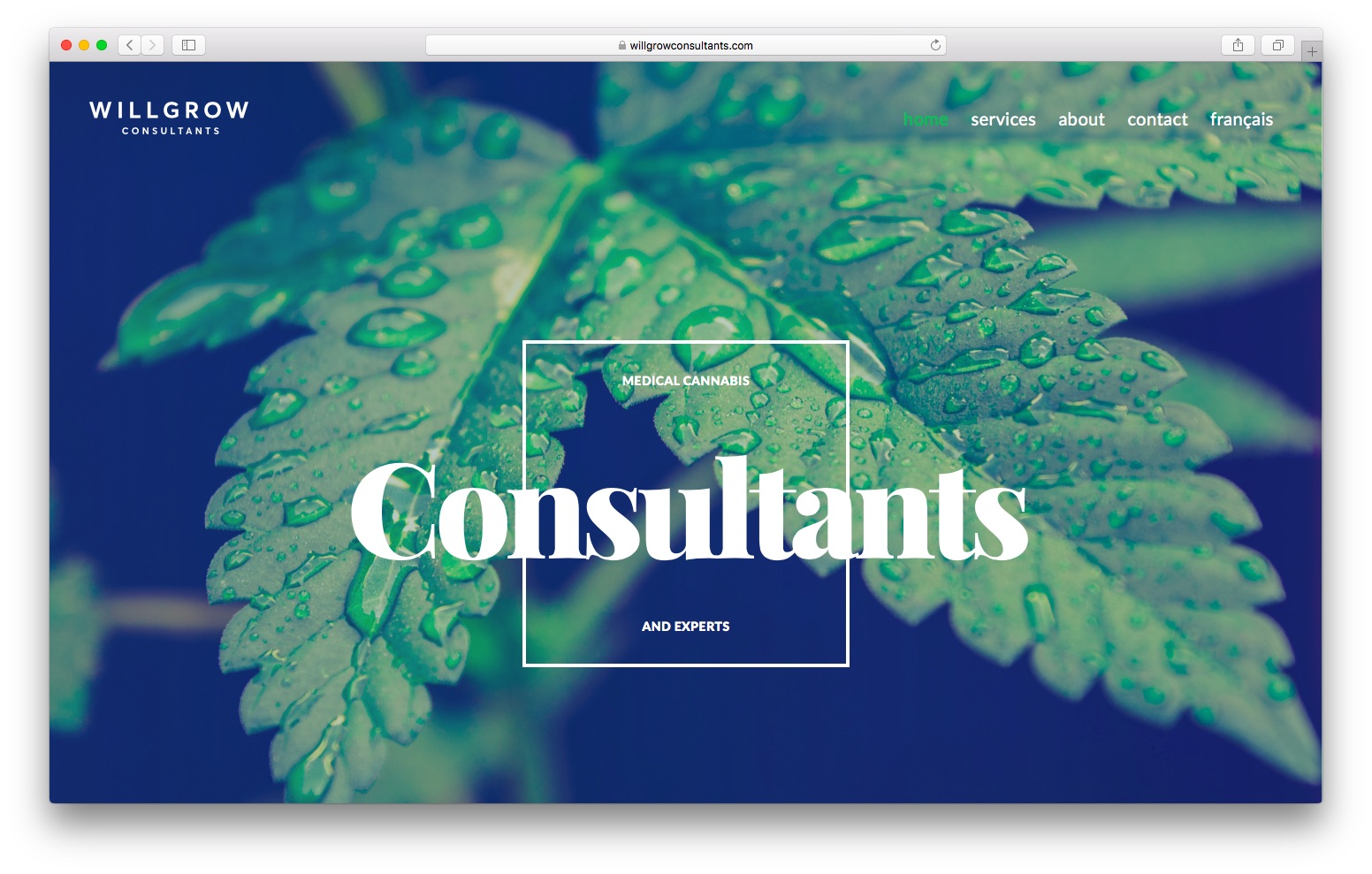 Will Grow Consultants